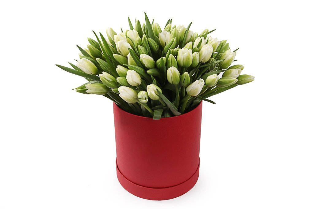 Букет 101 тюльпан в коробке, белые фото