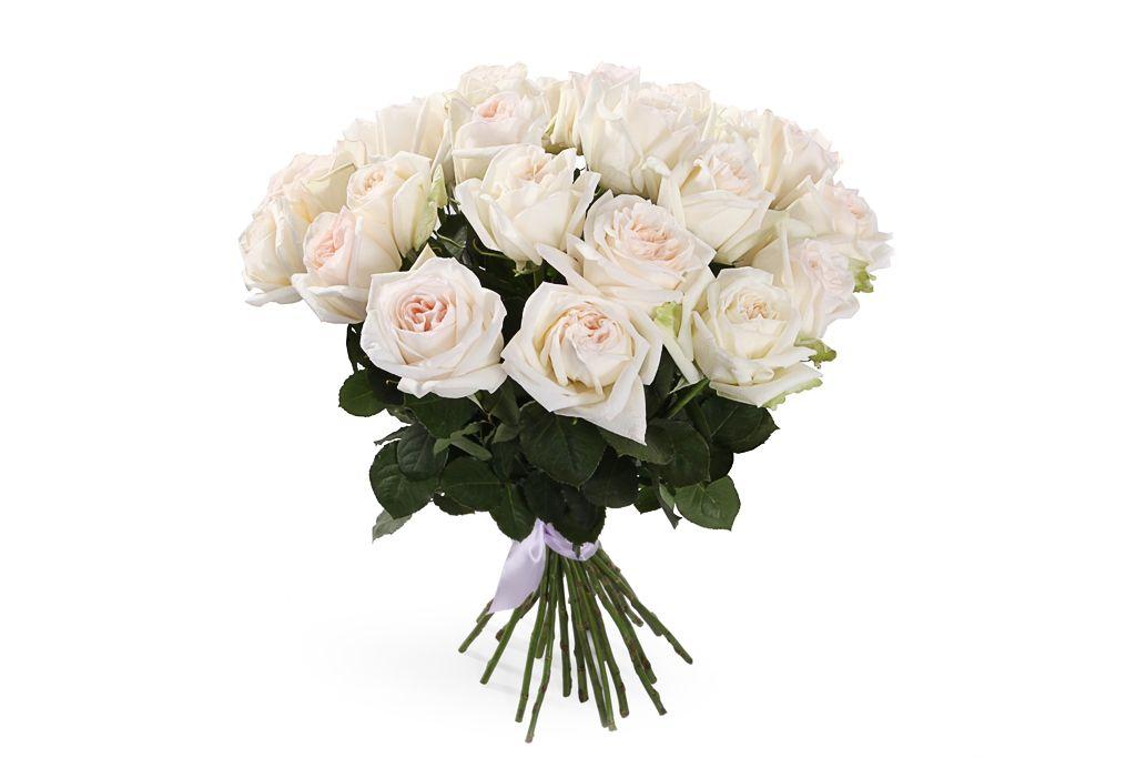 Букет 25 роз Вайт О'Хара фото