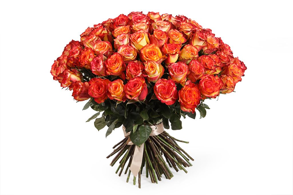 Букет 101 роза Хай Мэджик фото