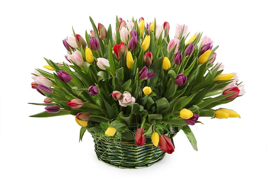Букет 101 тюльпан в корзине фото