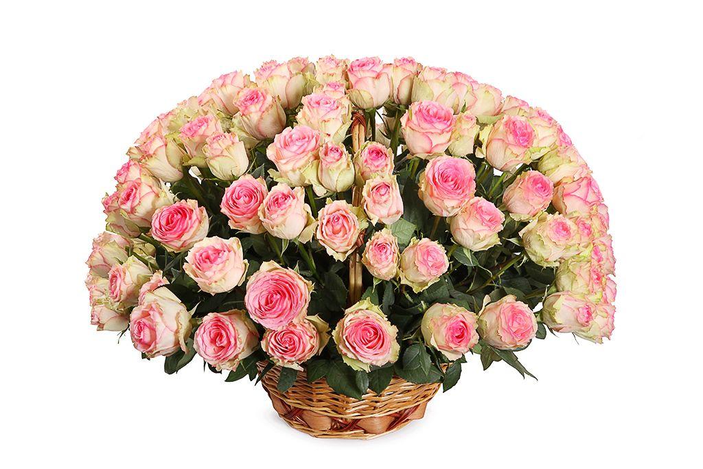 Букет 101 роза Эсперанс в корзине фото