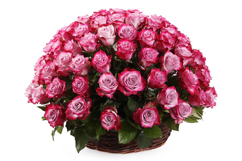 Букет 101 роза Дип Перпл в корзине фото
