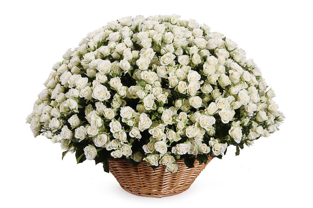 Букет 101 кустовая роза Сноуфлейк в корзине фото