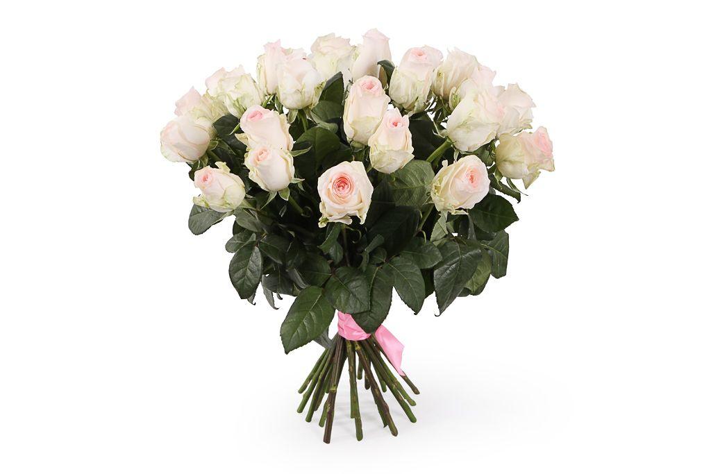 Букет 25 роз Сеньорита фото