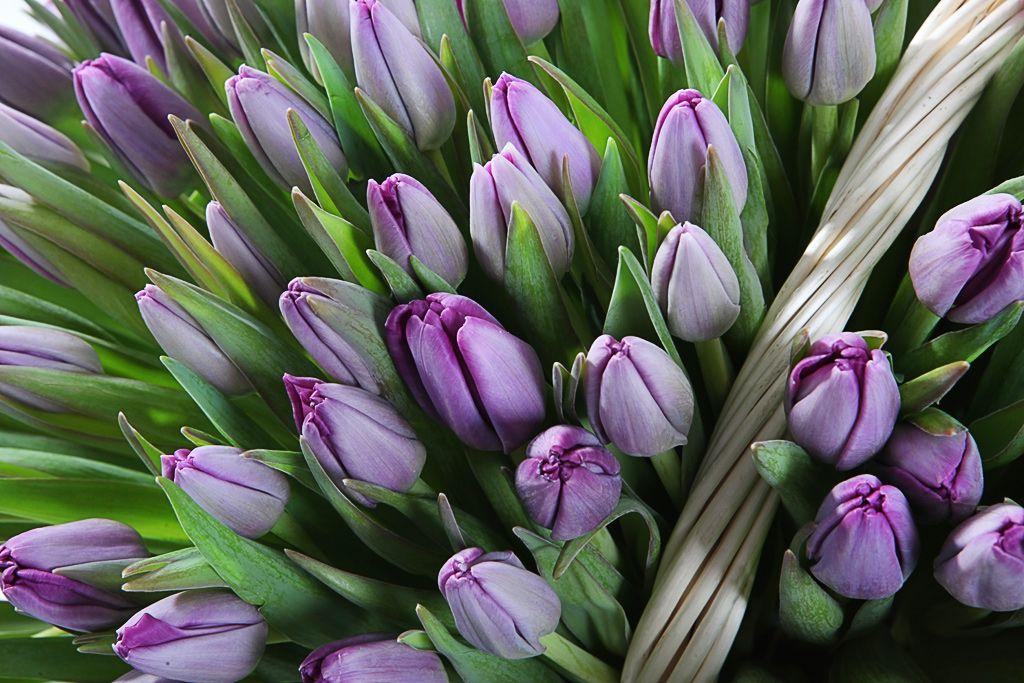 это стихи фиолетовые тюльпаны него
