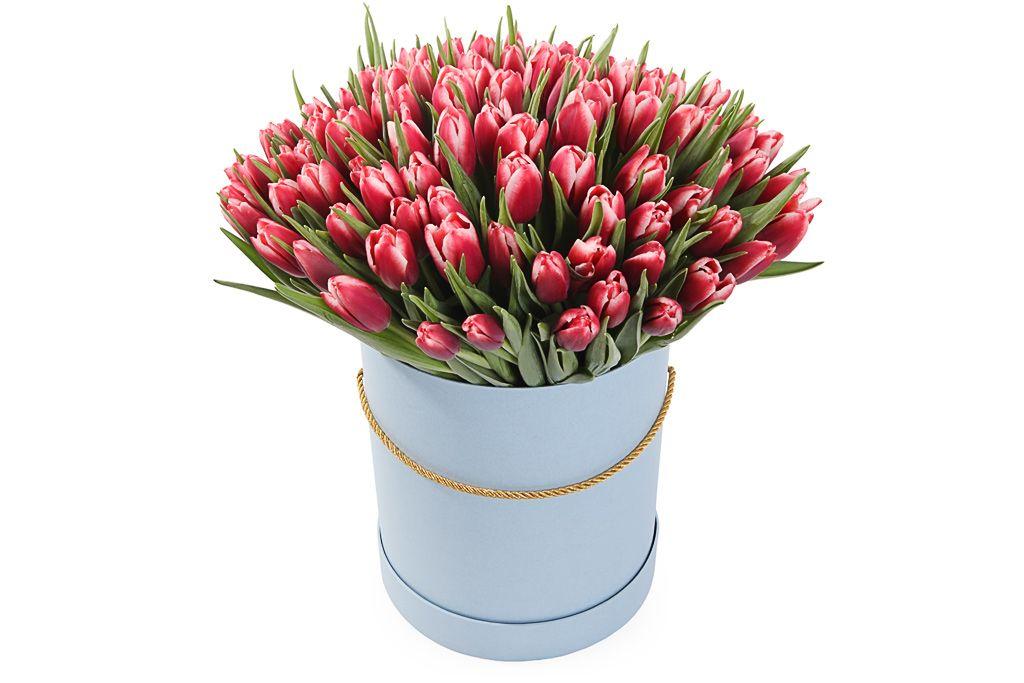 Букет 101 королевский тюльпан в голубой коробке, алые фото