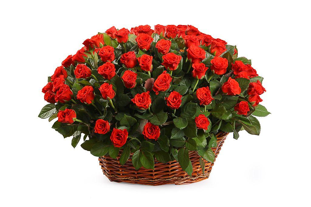 Букет 101 роза в корзине, 50 см фото