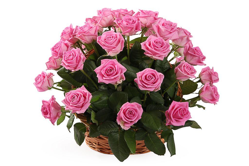 Букет 35 роз Аква в корзине фото