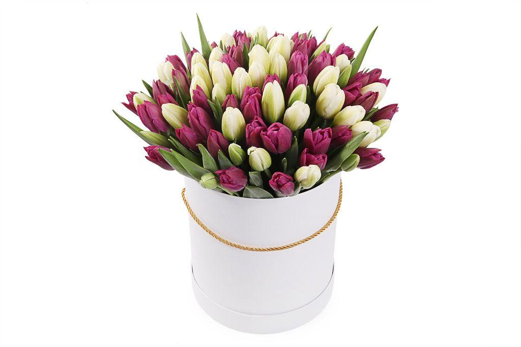 Букет 101 королевский тюльпан в белой коробке, бело-пурпурный микс фото