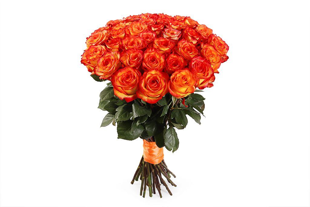Букет 35 роз Хай Мэджик фото