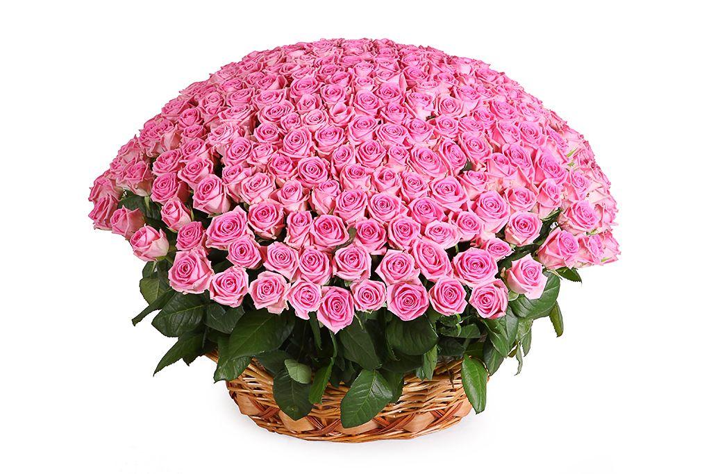 Букет 251 роза Аква в корзине фото