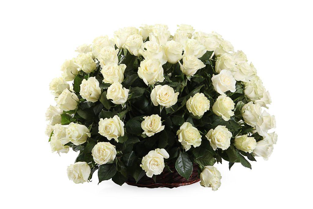 Букет 101 роза Мондиаль в корзине фото
