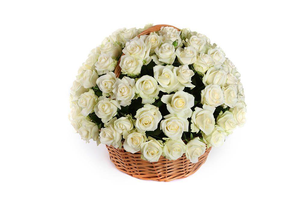 Букет 101 роза Аваланш в корзине фото