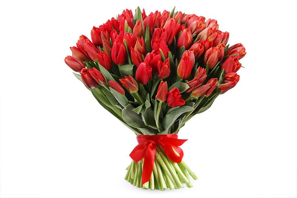 Букет 101 королевский тюльпан, красные фото