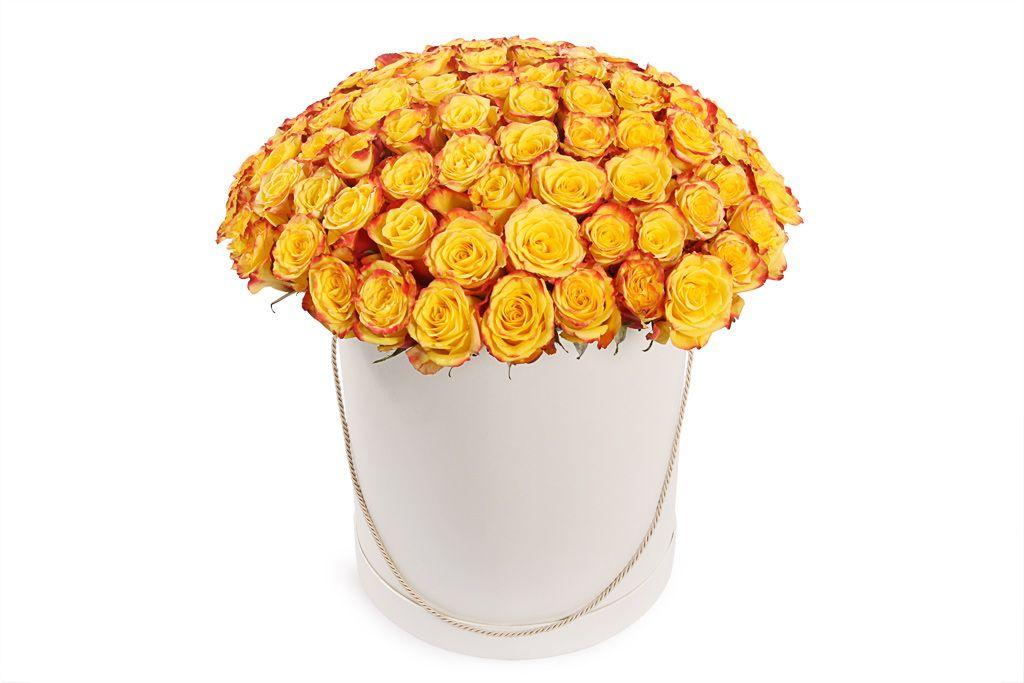 Букет 101 роза Хай Еллоу в шляпной коробке фото