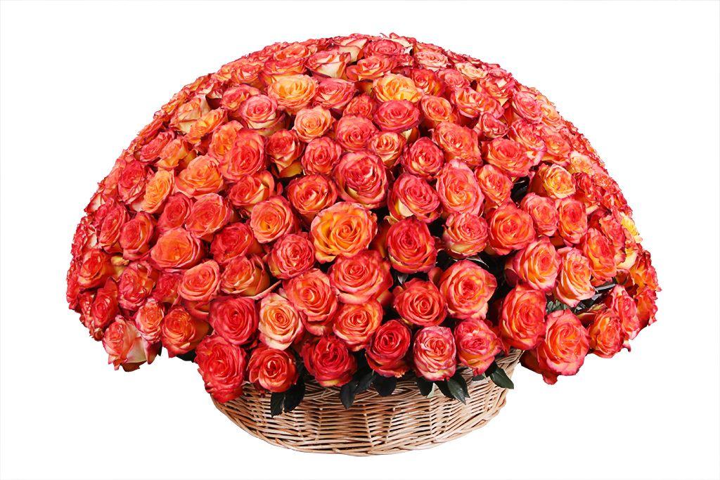 Букеты огромные роз картинки, прикольные нарисованные