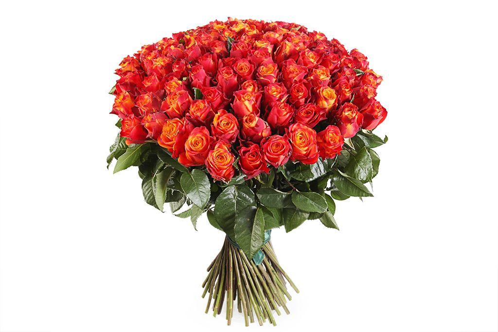 Букет 101 роза Атомик фото