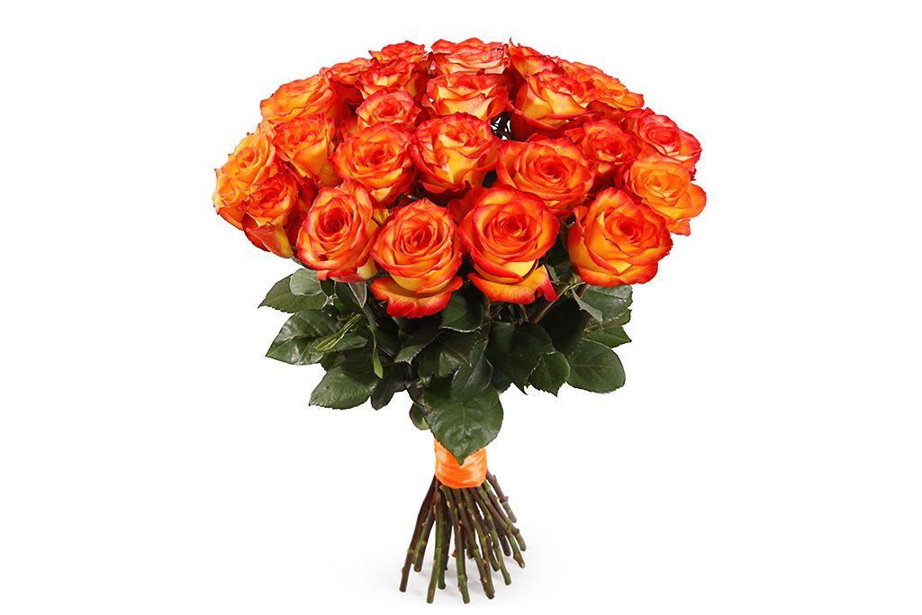 Букет 25 роз Хай Мэджик фото