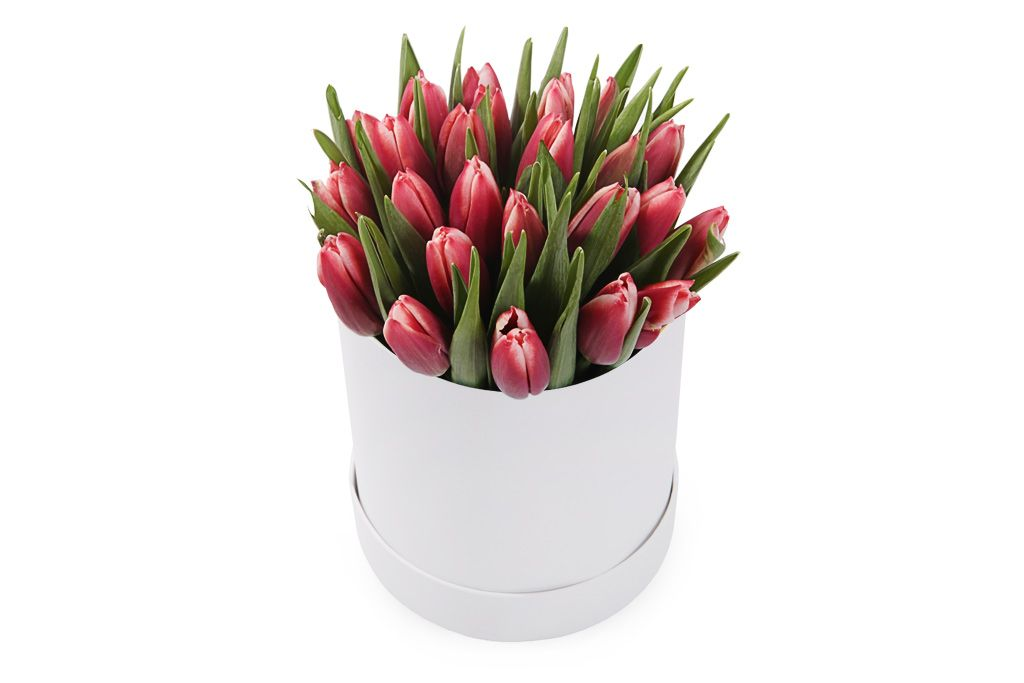 Букет 25 королевских тюльпанов в белой коробке, алые фото