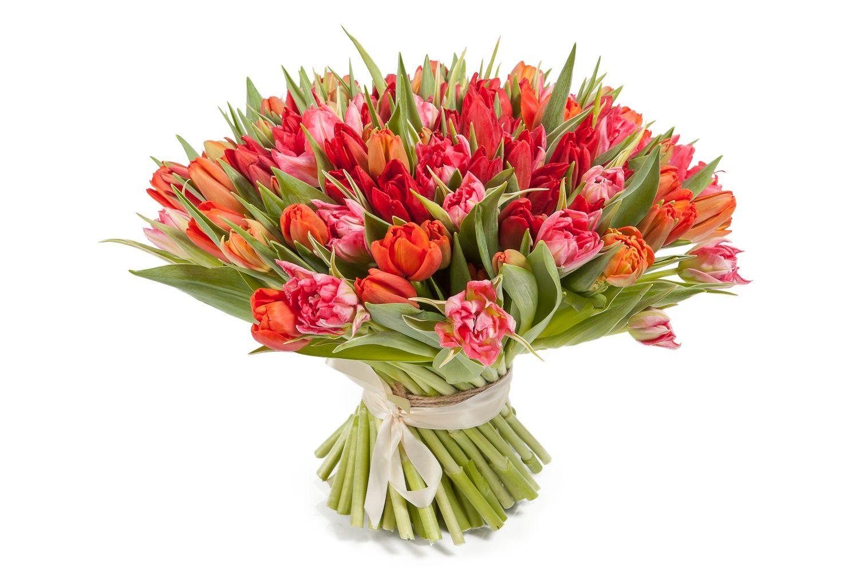 Букет 101 тюльпан, красно-розовые фото