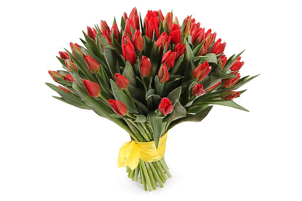 Букет 51 королевский тюльпан, красные фото