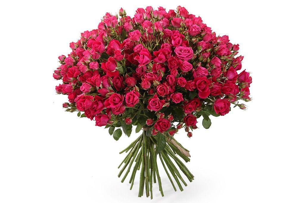 Букет 51 кустовая роза Алисия фото