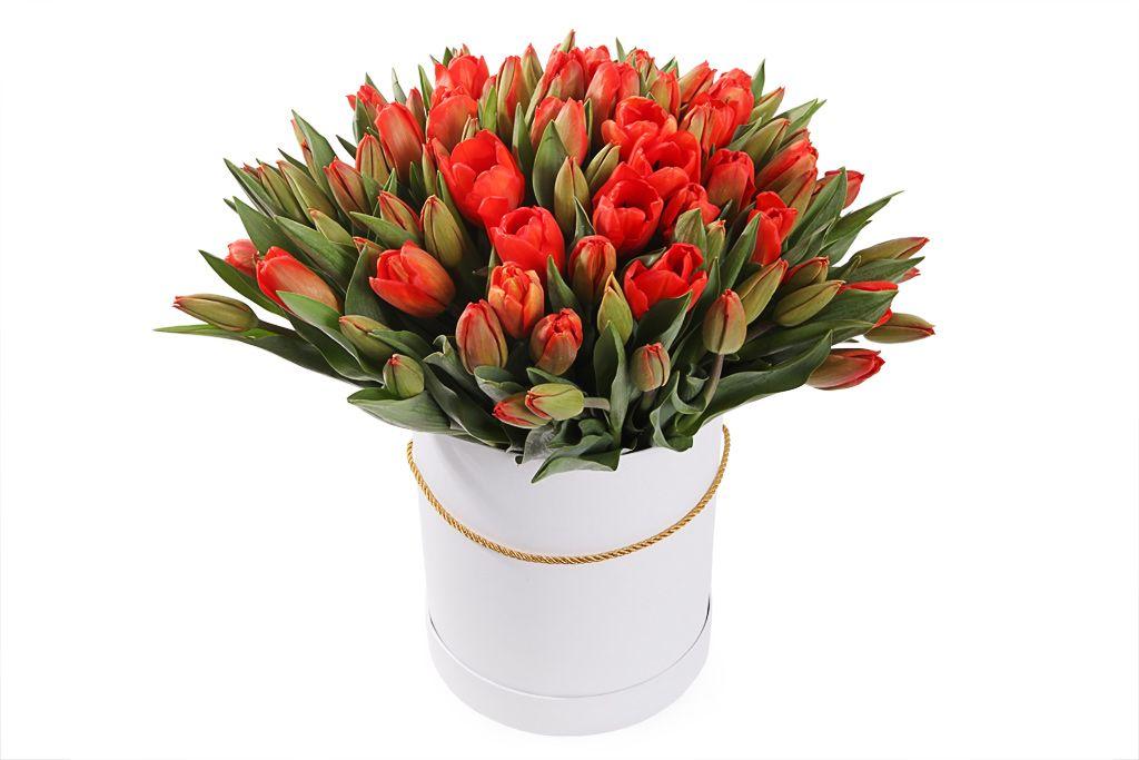 Букет 101 королевский тюльпан в белой коробке, красно-оранжевые фото