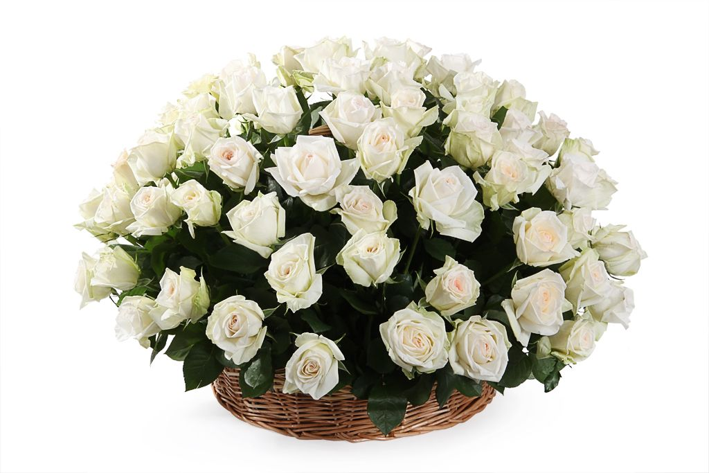 Букет 101 роза Вайт О'Хара в корзине фото