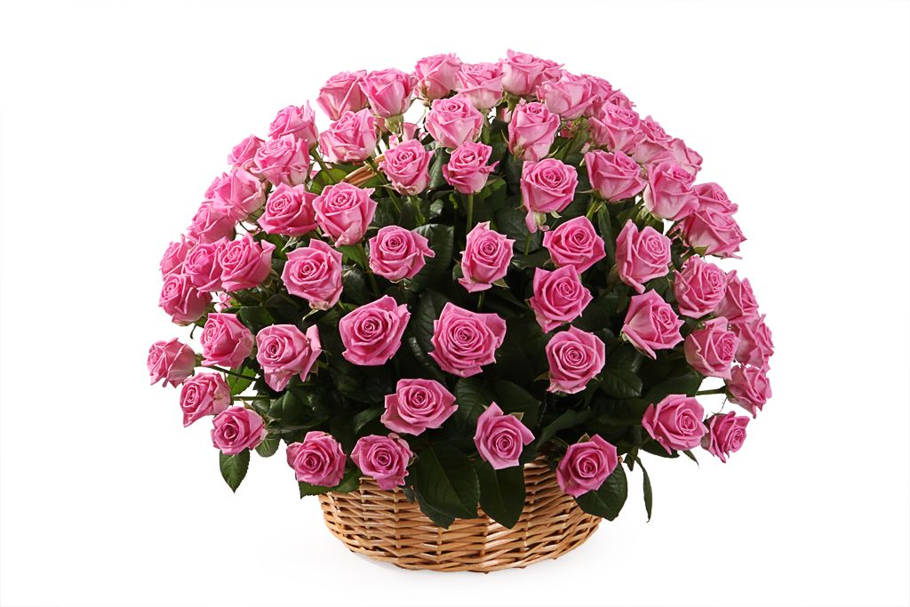 Букет 101 роза Аква в корзине фото