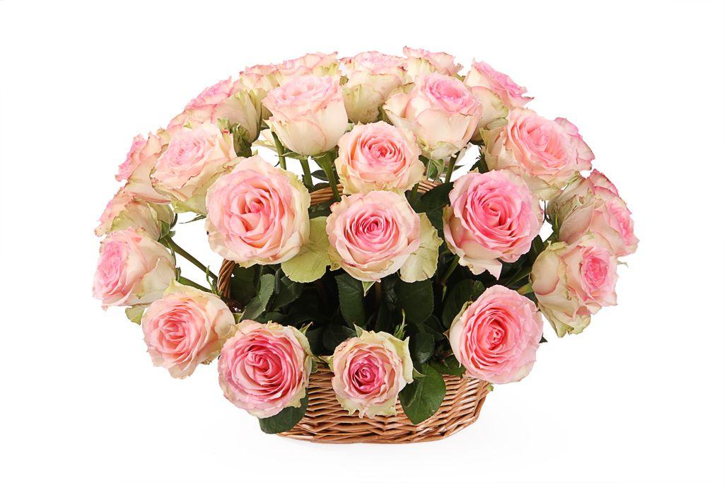 Букет 35 роз Эсперанс в корзине фото