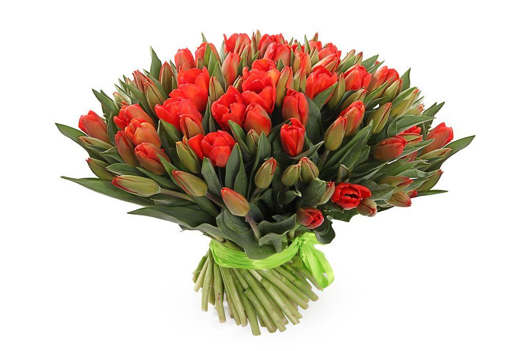 Букет 101 королевский тюльпан, красно-оранжевые фото