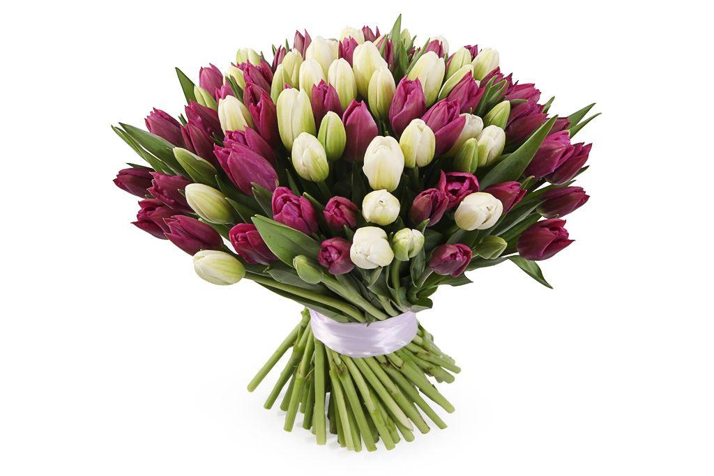 Букет 101 королевский тюльпан, бело-пурпурный микс фото