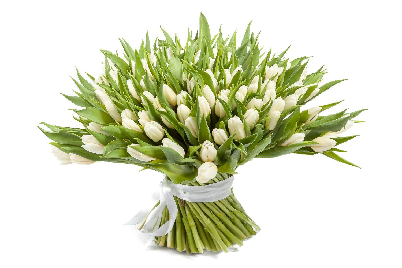 Букет 151 тюльпан, белые фото