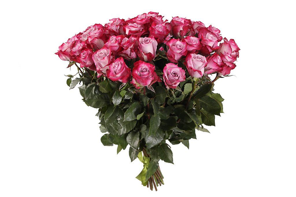 Букет 41 роза Дип Перпл фото