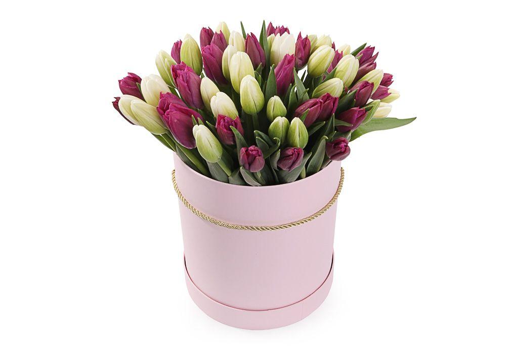 Букет 51 королевский тюльпан в розовой коробке, бело-пурпурный микс фото