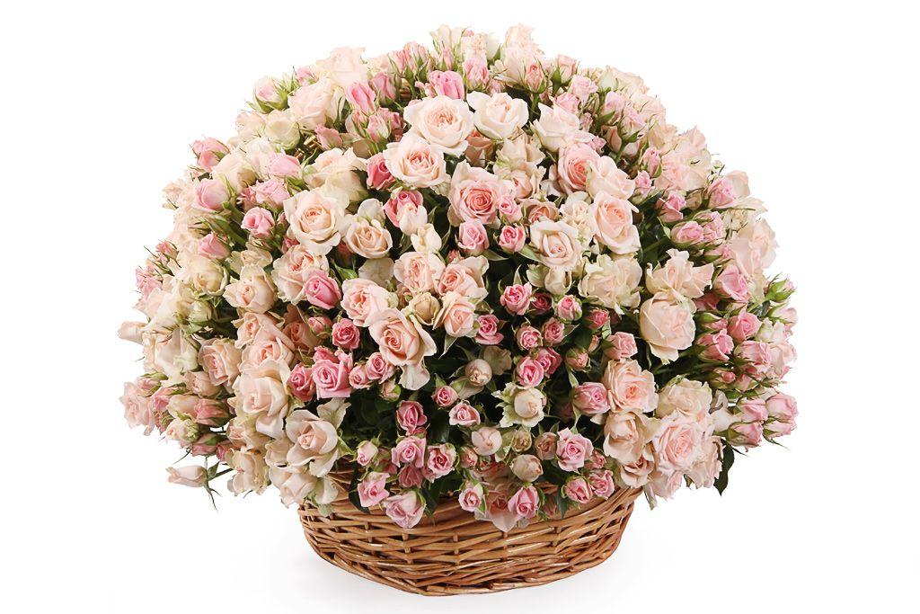 маленькие розы открытки цветы