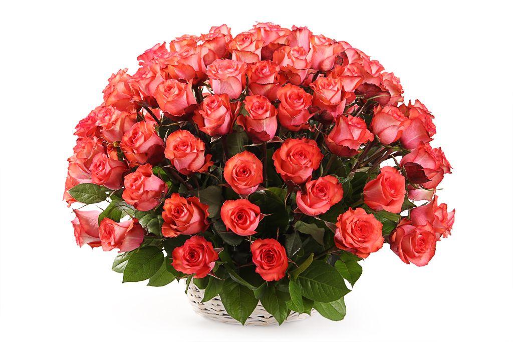 Букет 101 роза Игуана в корзине фото