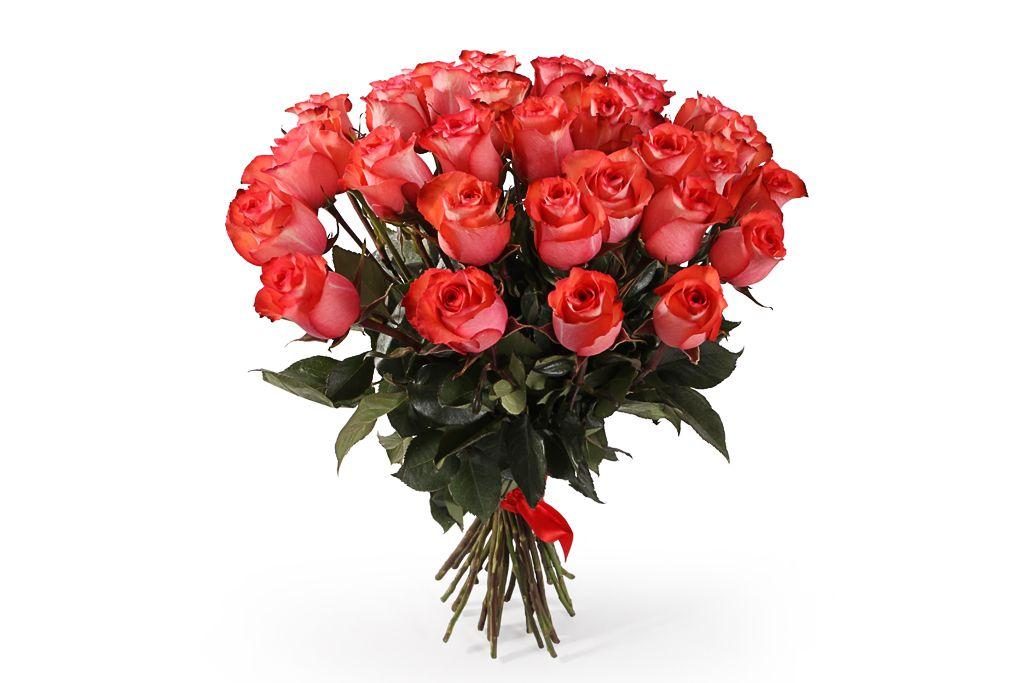 Букет 35 роз Игуана, коралловые фото