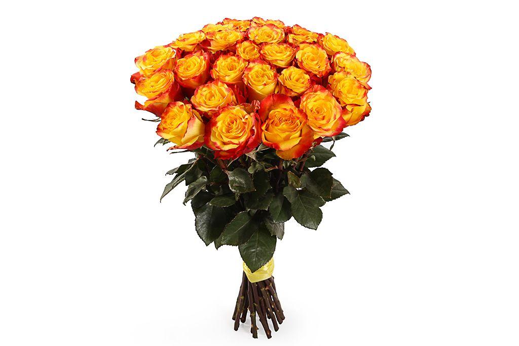 Букет 25 роз Хай Еллоу фото