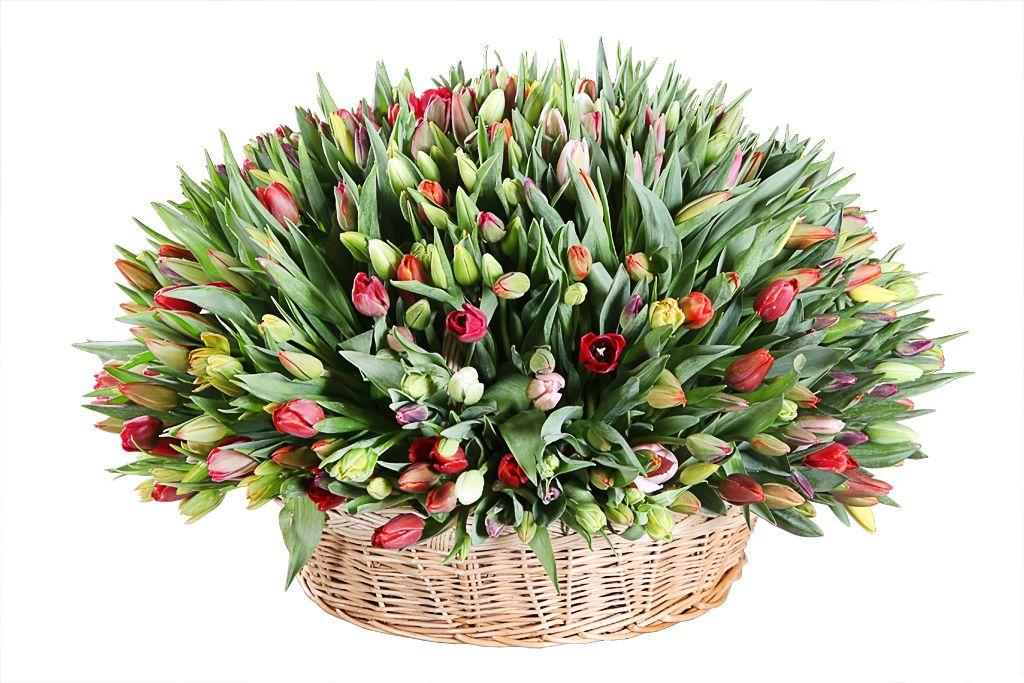 Композиция Весеннее головокружение (501 тюльпан) фото