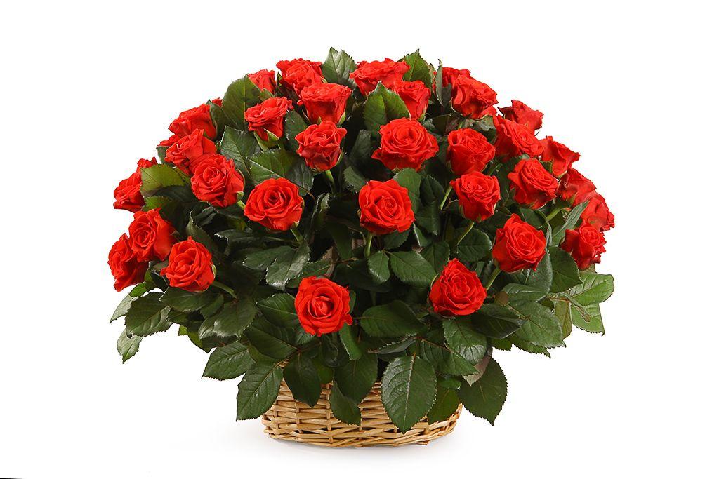 Букет 51 роза в корзине, 50 см фото