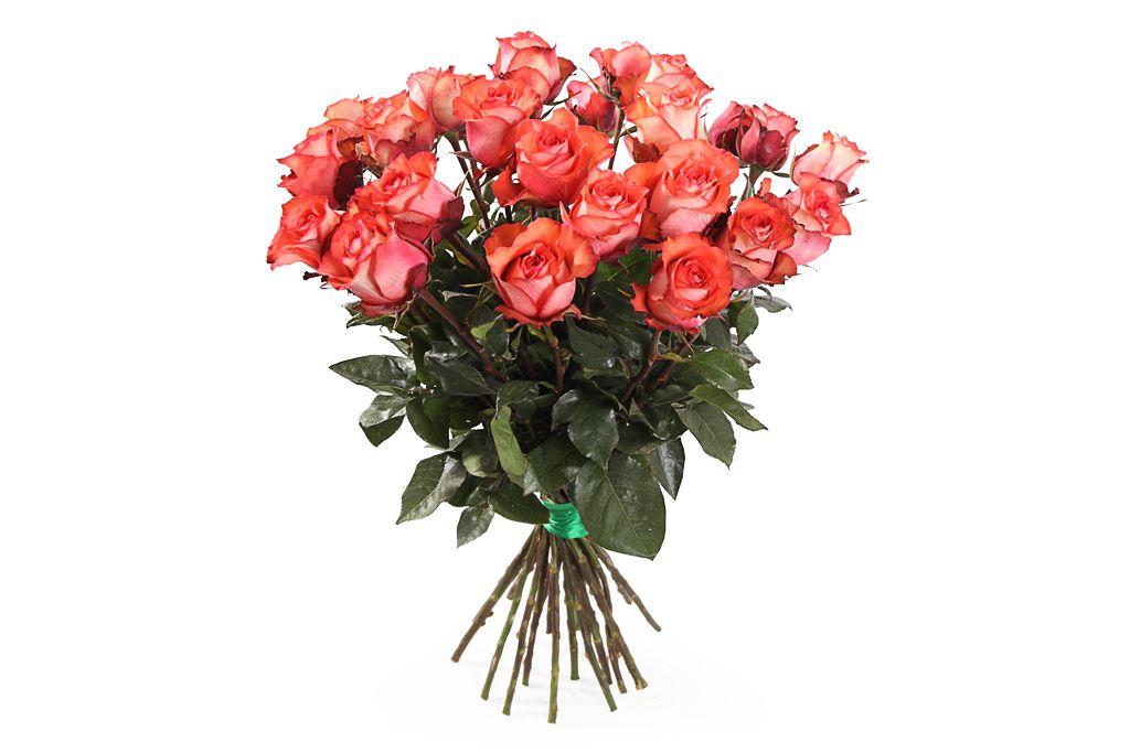 Букет 25 роз Игуана, коралловые фото