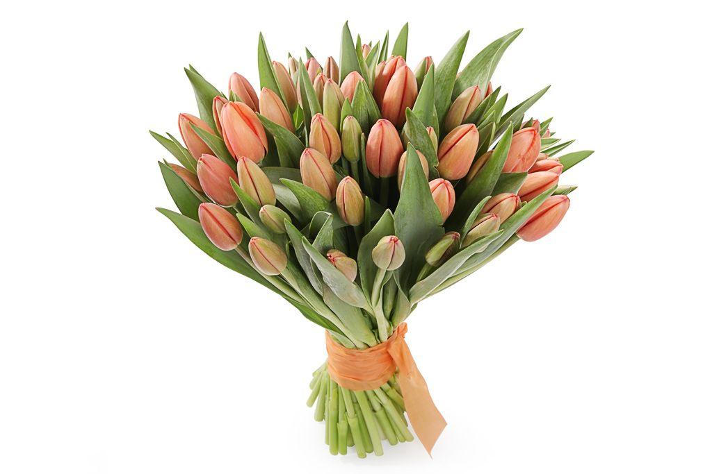 Букет 51 королевский тюльпан, коралловые фото