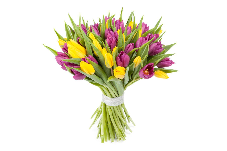 Букет 51 тюльпан, желто-фиолетовые фото