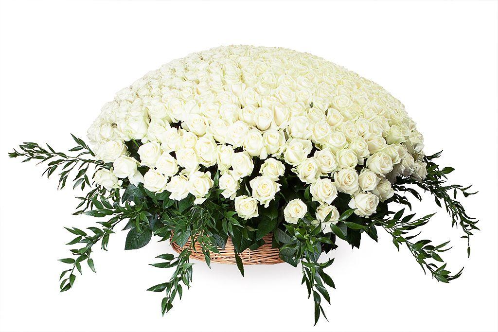 Букет 501 роза Аваланш в корзине фото