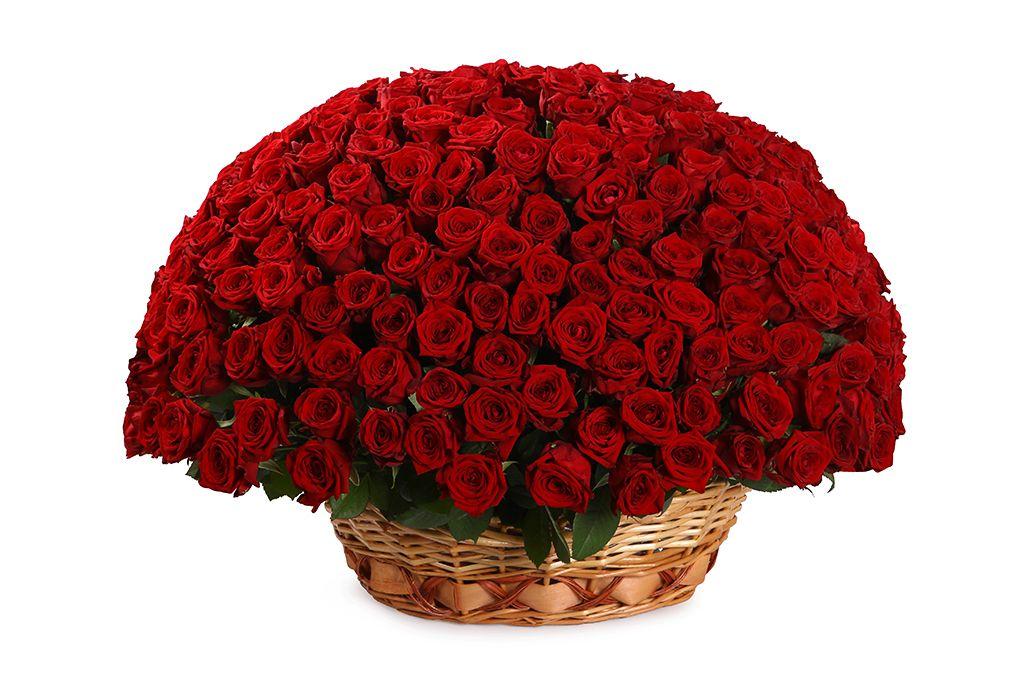 Букет 251 роза в корзине фото