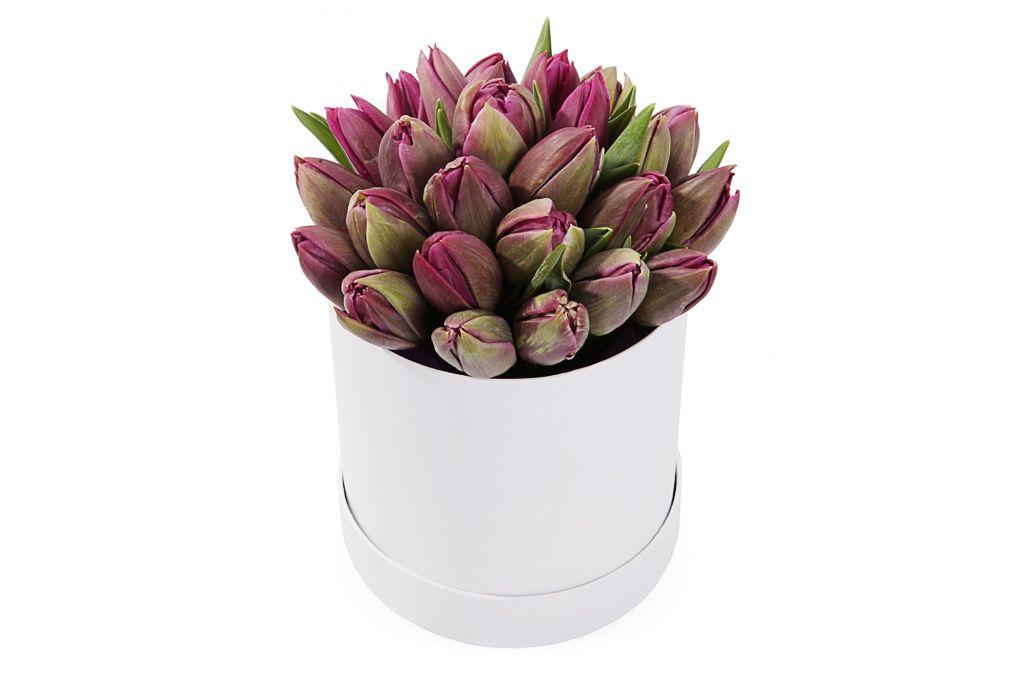 Букет 25 королевских тюльпанов в коробке, пурпурные фото