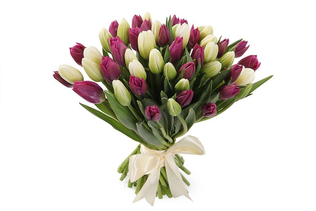 Букет 51 королевский тюльпан, бело-пурпурный микс фото