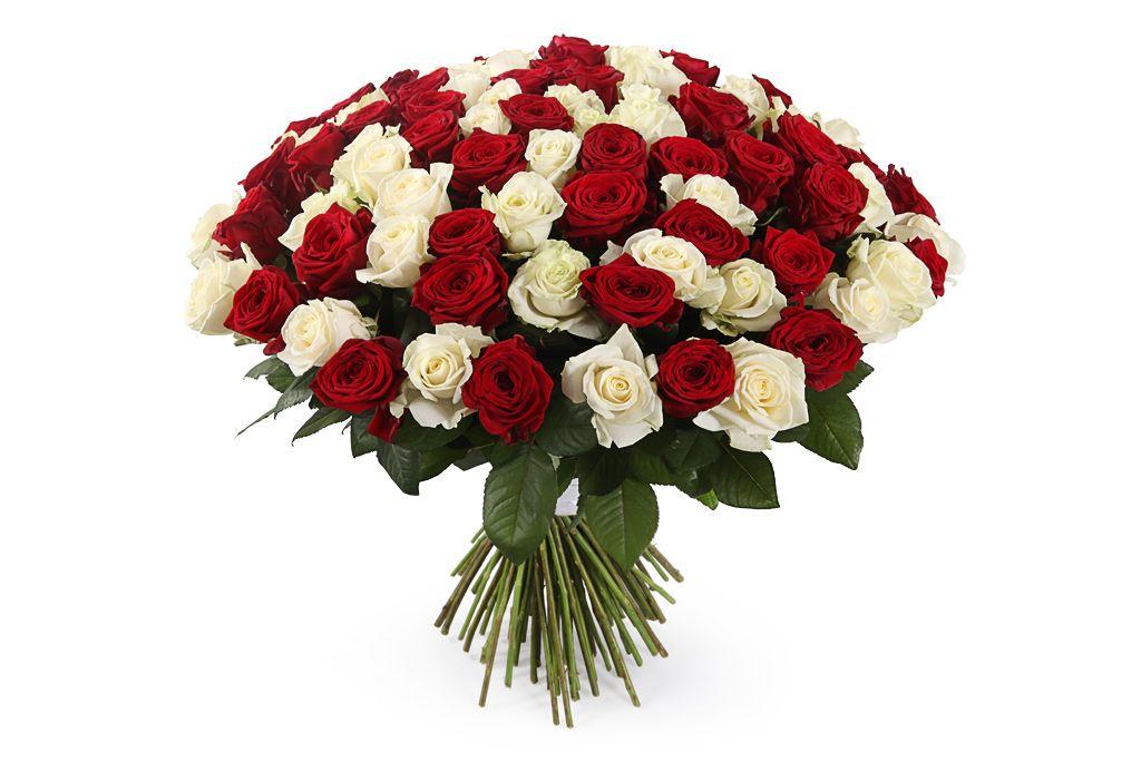 Букет 101 роза красно-белый микс фото