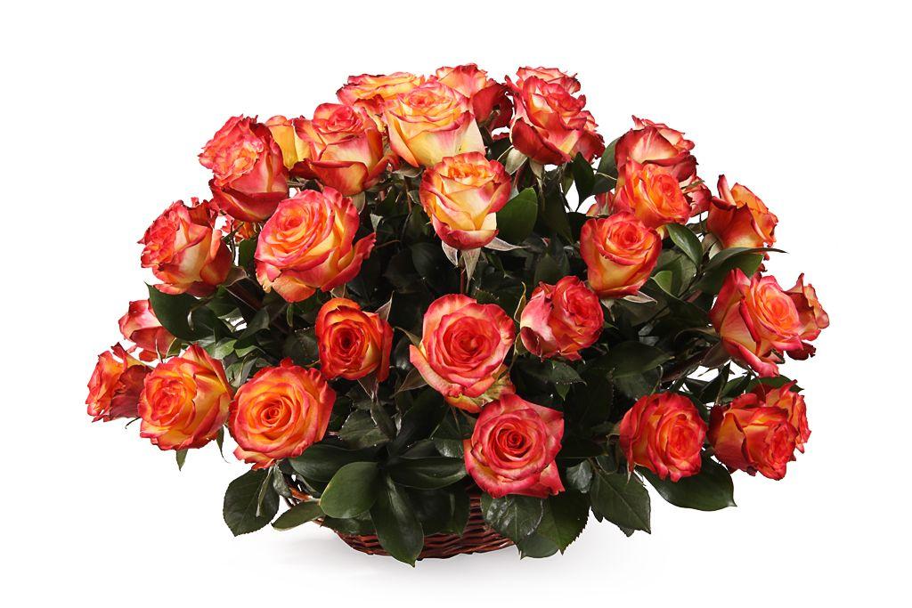Букет 51 роза Хай Мэджик в корзине фото